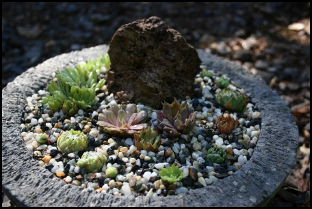 Mixed sempervivum hypertufa planter
